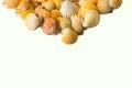 Set of seashell isolated on white background Royalty Free Stock Photo