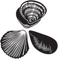 Set of seashells black and white style Royalty Free Stock Images