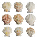Set of seashells collection isolated on white background Stock Image