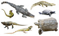 Set of several reptilian isolated on white Royalty Free Stock Photo