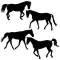Set silhouette of black mustang horse vector illustration Royalty Free Stock Photo