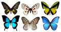 Set of six butterfly isolated on white background with clipping path Royalty Free Stock Photo