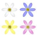Set of Six Petal Flower