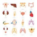 Set of sixteen human organs and anatomic parts color flat icons
