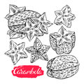 Set of sketch carambola