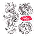 Set of sketch different cabbages