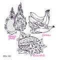 Set of sketch exotic fruits