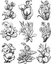 Set of sketches of flower Stock Images