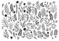 Set of sketches and line doodles hand drawn design floral elements vector illustration eps Royalty Free Stock Photos