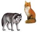 Seduta volpe e lupo