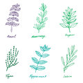 Set of some provence herbs basil rosemary oregano thyme pep in sketch style peppermint salvia Stock Images