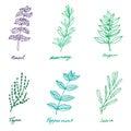 Set of some provence herbs: basil, rosemary, oregano, thyme, pep