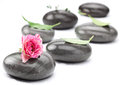 Set of spa massage stones with rose on a white background Stock Images