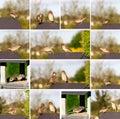 Set of sparrow on bird feeders house for the birds Stock Photos