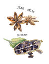 Set of spice, drawing by watercolor, hand drawn illustration Royalty Free Stock Photo