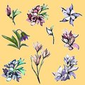 A set of stickers of bright flowers and bouquets. Delicate pink and purple flowers. Vector illustration