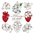 Set of stylized anatomical Human Heart and White Lilies drawings.