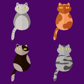 Set of stylized icons in form of cats of different breeds with yellow eyes. Flat style. Vector