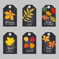 Set of tags with tree leaves. Royalty Free Stock Photo