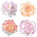 Set of 4 in 1 tender soft color flowers: pelargonium, roses and clove flower isolated Royalty Free Stock Photo