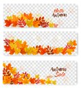 Set Of Three Autumn Sale Banners With Colorful Leaves Royalty Free Stock Photo