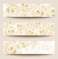 vector set of three  banners with white roses. Royalty Free Stock Photo
