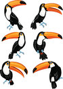 Set of toucans six cartoon in different positions Stock Photos