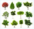 Set of trees isolated vector on white background Stock Photos