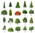 Set of trees isolated on white background vector illustration Stock Photography