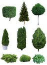 Set of trees and shrubs. Royalty Free Stock Photo