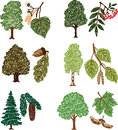 Set of the trees vector images various forest Royalty Free Stock Image