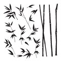 Set of tropical bamboo elements. Collection of palm leaves on a white background. Vector illustration.