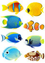 Set of tropical fish Stock Photo
