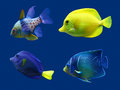 Set of tropical fish. Royalty Free Stock Photo