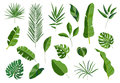 Set of tropical leaves. Different green leaf collection. Colorful vector illustration on white background in cartoon Royalty Free Stock Photo