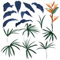 Set of tropical leaves and exotic plants vector