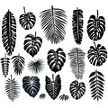 Set of Tropical Leaves Royalty Free Stock Photo