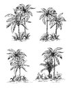 Set tropical palm trees with leaves