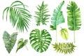 Set of tropical watercolor leaves