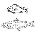 Set of Two Fishes. Freshwater Fish. Vector Illustration Isolated On a White Background Royalty Free Stock Photo