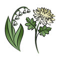 Set of two outlined flowers. Lilies and chrysanthemums Royalty Free Stock Photo