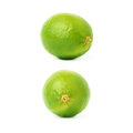 Set of two single limes in different compositions and foreshortenings, isolated over the white background Royalty Free Stock Photo