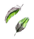 Set of two watercolor feathers Royalty Free Stock Photo