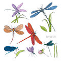 Set of various dragonflies in different poses. Colorful hand drawn collection flying adder. Vector illustration.