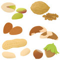 Set of various nuts Stock Images