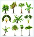 Set of various palm trees vector illustration Stock Images