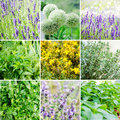 Set of various plants and herbs with lavender Stock Image