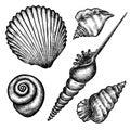 Set of various seashells