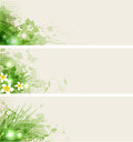 Set vector banners flowers green leaves Stock Image