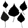 Set of vector black birch leaves outline on the white background for your design Royalty Free Stock Photos